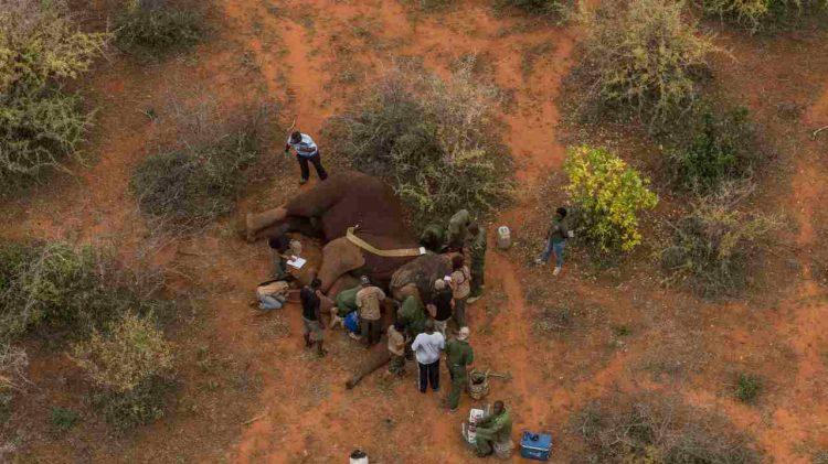 kenya incendio morti 5 elefanti