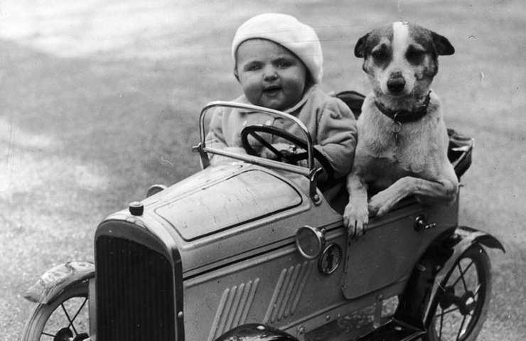 Neonato e cane bebè in arrivo adattamento