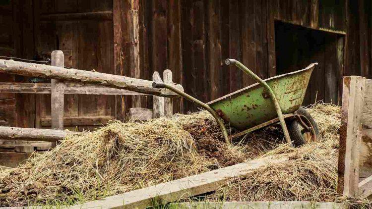 donna povera stalla erba