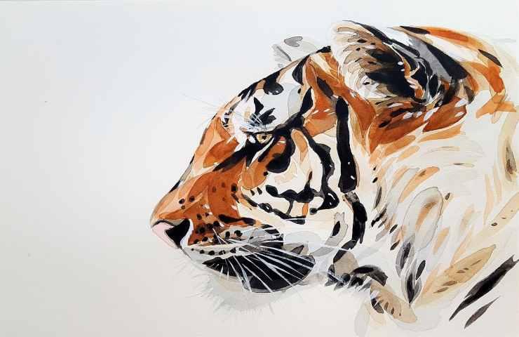 Test personalità, vedi prima la tigre o il leone?