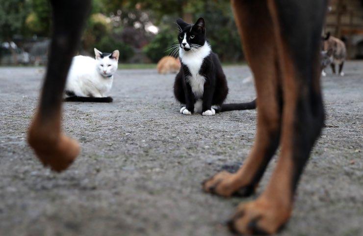 Cani gatti d'accordo razze possibile