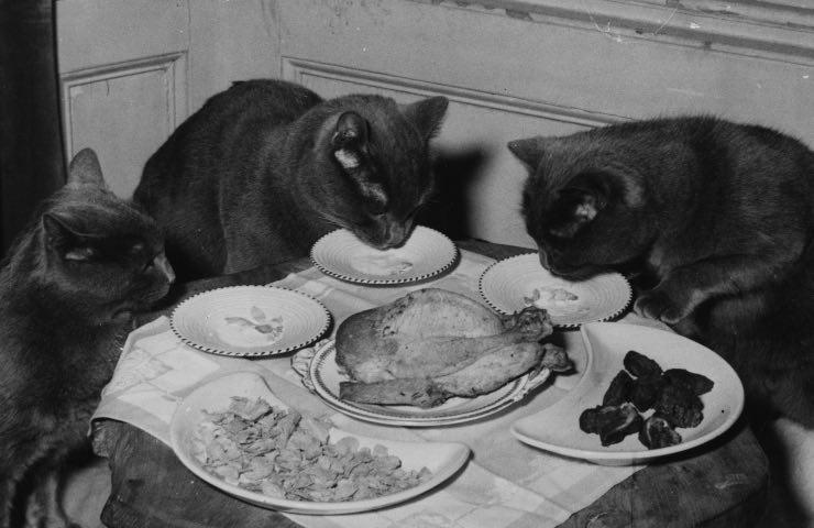 gatti soli casa come comportarsi