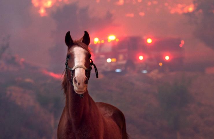 cavallo cure cibo necessità comportarsi