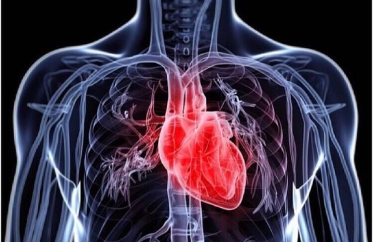 Muscolo cardiaco alimentazione cereali