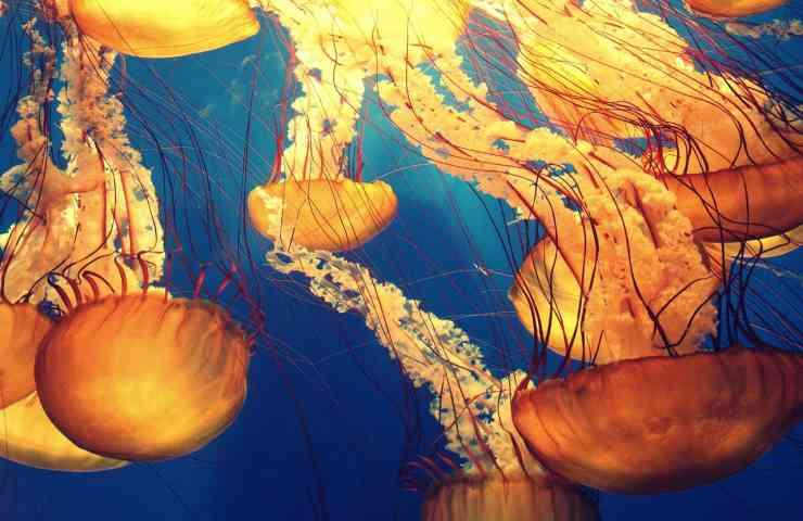 rimedi naturali morsi medusa