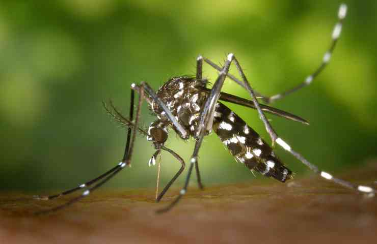 rimedi punture zanzare