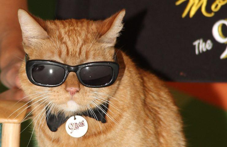gatto nomi belli maschili personalità