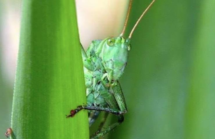 insetti luce attratti motivo